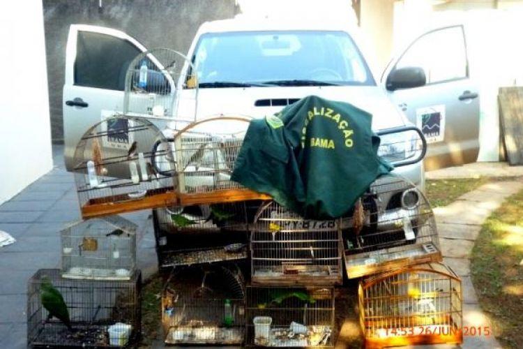 IBAMA autua 12 pessoas por irregularidades em criação de pássaros silvestres em Mato Grosso do Sul